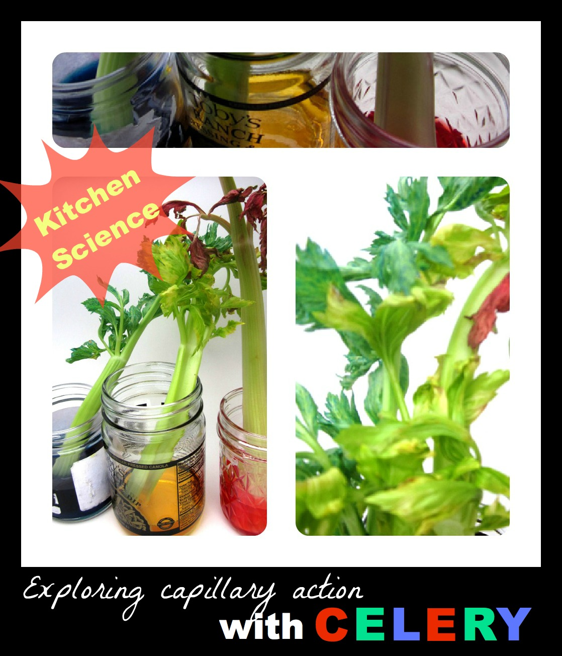 Kitchen Science: Mama's Little Muse: Colorful Celery: Kitchen Science; AND