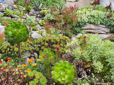 Mixture of succulents and unusual plants at St Michael's Mount