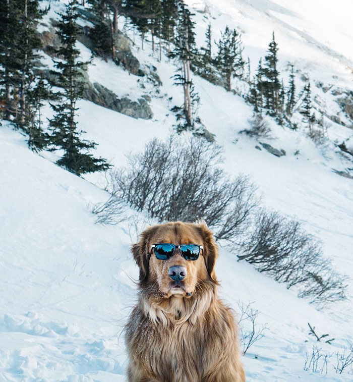 32 Animals That Look Like They're About To Drop The Hottest Albums Of The Year - This Retriever Is Finally Coming Out With His Solo Album