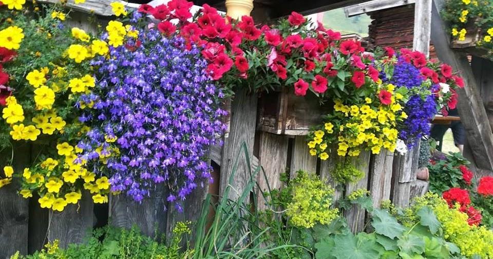 Arredare un terrazzo con piante e fiori. osantjpg with arredare un