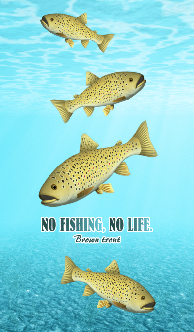 BROWN TROUT (1)