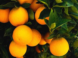 Valencia Orange Fruit Pictures