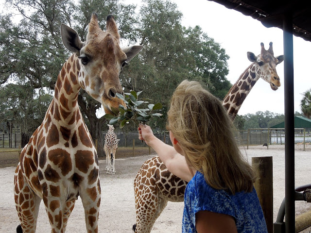 Susan and giraffe