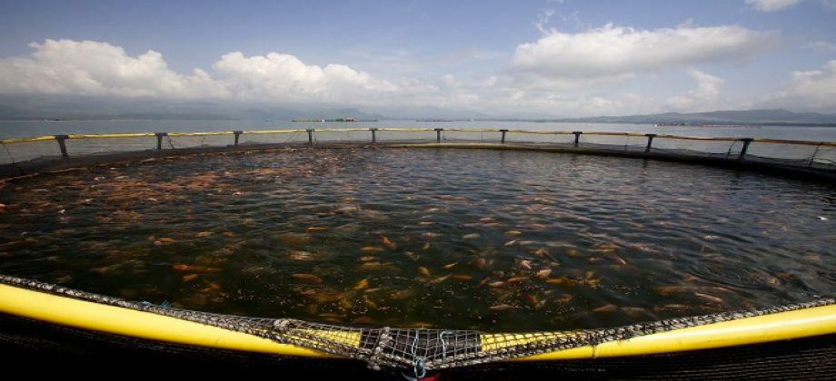 دراسة جدوى فكرة مشروع مزرعة أسماك فى مصر 2019