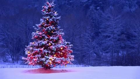 Lirik Lagu Seperti Palungan / Natal Di Hatiku