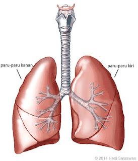 Jam Kerja Organ Tubuh Manusia