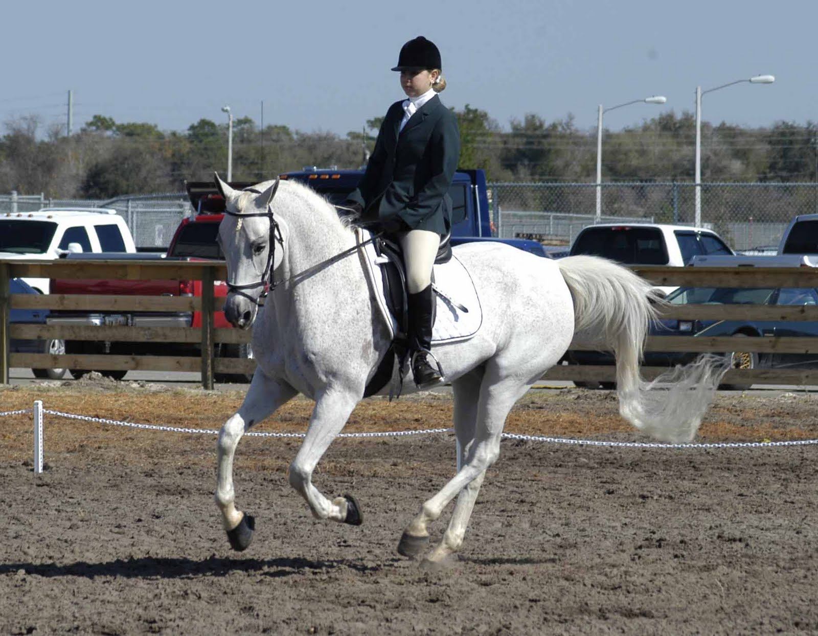 HD Animals Wallpapers: White Arabian Horse Pictures and ...  HD Animals Wall...
