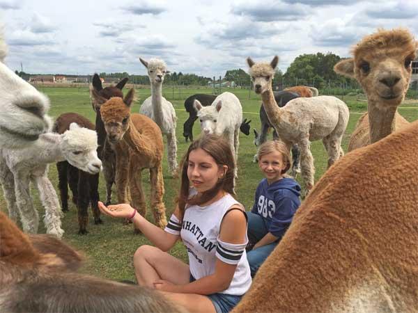 Alpaka Geschenk Idee Urlaub Alpaka Farm