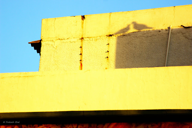 A minimalist photo of the Shadow of two birds sitting on a wall sharing an intimate moment
