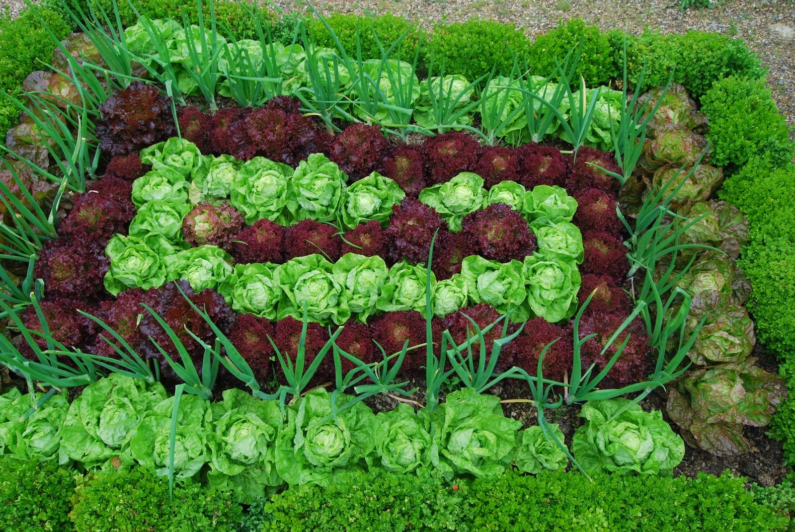 Image Result For Vegetable And Fruit Garden Layout