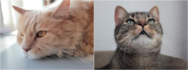 cat, cats, fellnasen, katze, blog, wochenrückblich, weekreview, josie´s litle wonderland