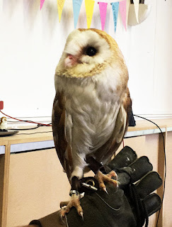 Barn Owl at a charity event in Chipping Sodbury