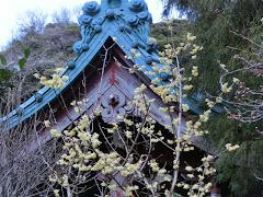 光則寺のロウバイ