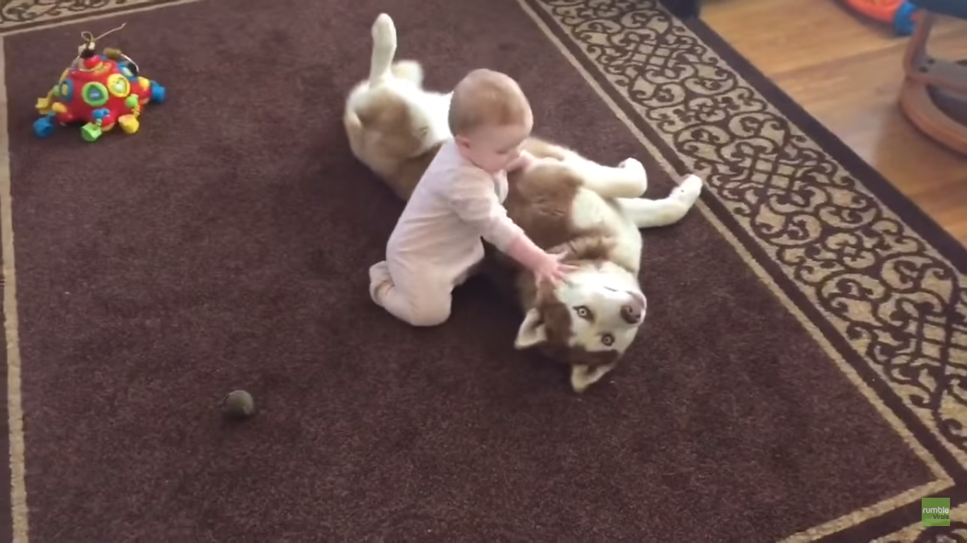 Very Cute!! Siberian Husky and 7-month-old Baby