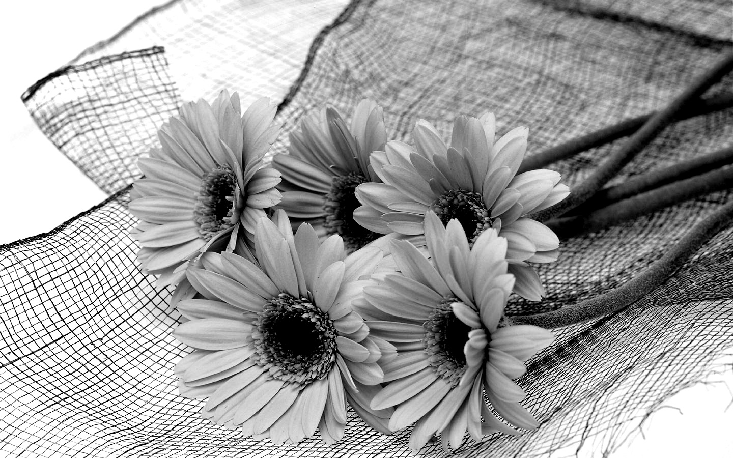 Pictures Of Flowers In Black And White - Beautiful Flowers