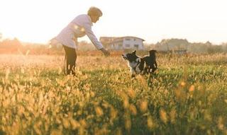 Los beneficios de entrenar a tu perro