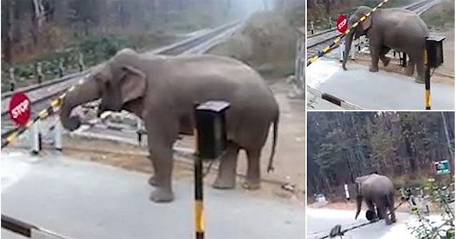Ελέφαντας διασχίζει τις γραμμές τρένου υπερπηδώντας όλα τα εμπόδια (βίντεο)