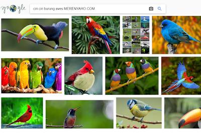 Ciri Ciri Burung AVES dan Karakteristiknya