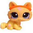 Littlest Pet Shop Dioramas Kitten (#1090) Pet