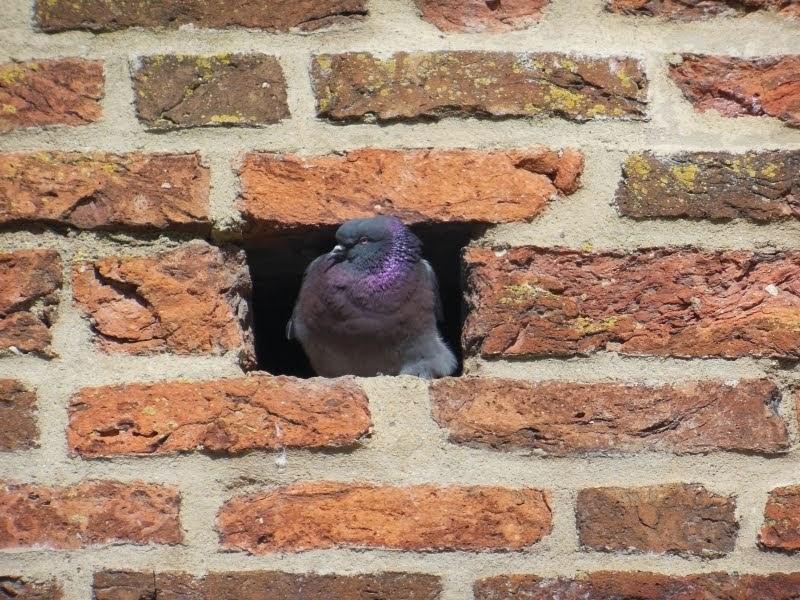 """""""Einraumwohnung"""" in der Stadtmauer von Prenzlau"""