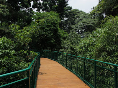 Forest Walk - Bandung