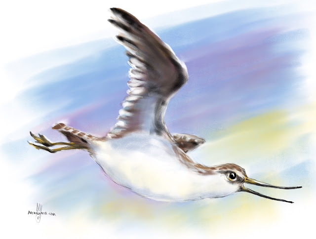 Terek sandpiper bird painting by Artmagenta