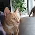 kosten huisdier; we hebben een kat!