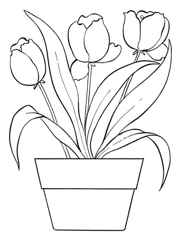 Gambar Mewarnai Bunga Tulip Terbaru Gambar Mewarnai