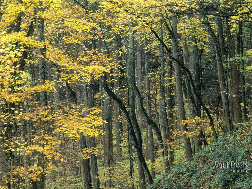 Forest Wallpaper Hd Floresta Papel De Parede Papel De Parede E Imagens Para Pc