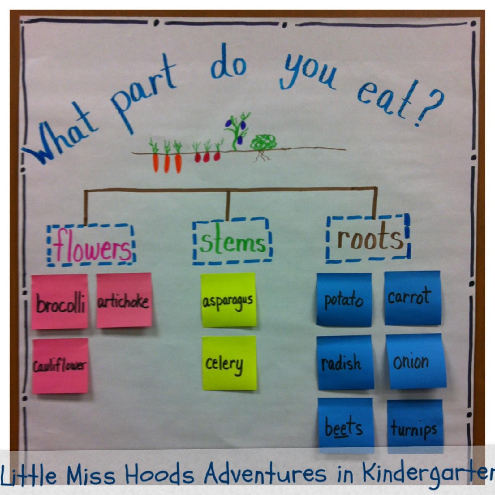 little miss hood 39 s adventures in kindergarten plants. Black Bedroom Furniture Sets. Home Design Ideas