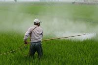 No, los pesticidas no producen autismo, al menos no todos