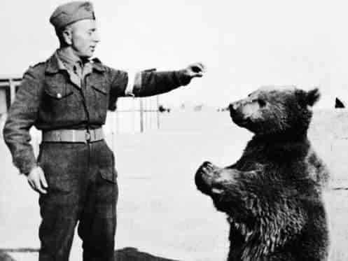 Seekor Beruang berpangkat Kopral di Perang Dunia II