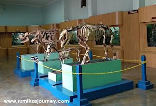 kerangka hewan museum zoologi bogor