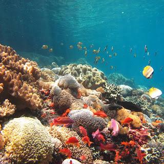 Toyapakeh Wall Snorkeling Nusa Penida Bali