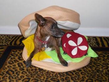 chien hamburger