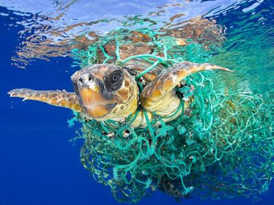 turtle in plastic