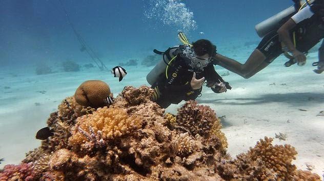 Korallenriff beim Tauchen Malaysia