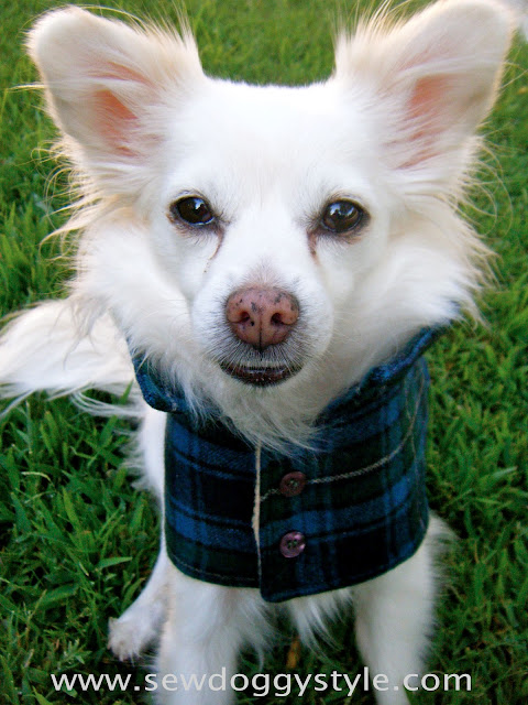 dog coat template - sew doggystyle diy pet coat pattern sewing it together