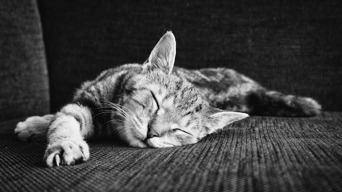 Wallpaper: Zen Of Sleeping Kitten