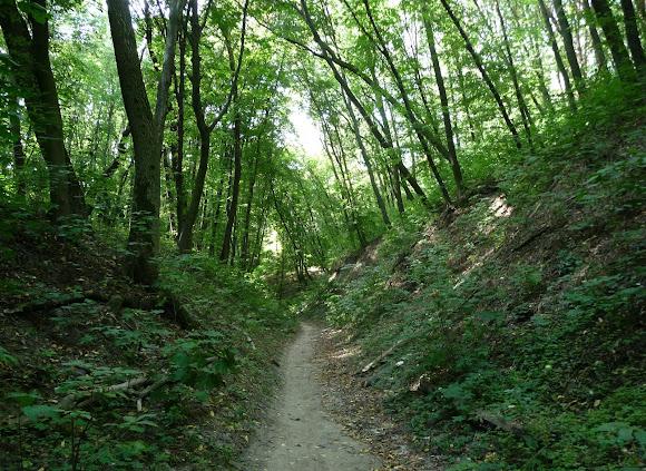 Київ. Територія Голосіївського природнього парку біля Китаївського монастиря