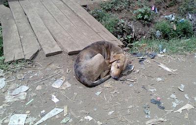 http://www.lemarginalmagnifique.com/2013/01/dogs-dreams.html