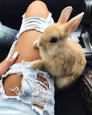 pose tumblr con conejo