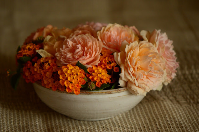 Monday vase meme, rose, Crown Princess Margareta, lantana, david austin rose, amy myers photography, amy myers ceramics, small sunny garden, desert garden