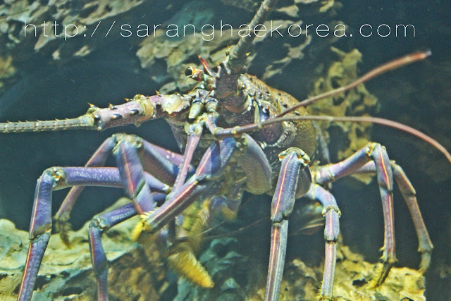 Some interesting sea creatures at COEX Aquarium