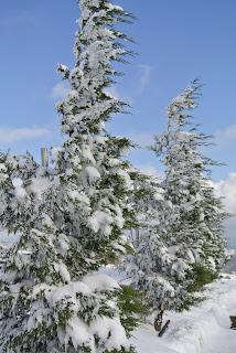 dallarında kar