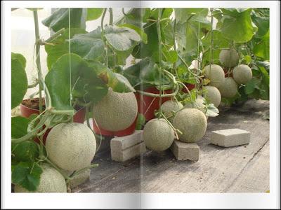 Bagian-bagian tumbuhan yang dapat dimakan