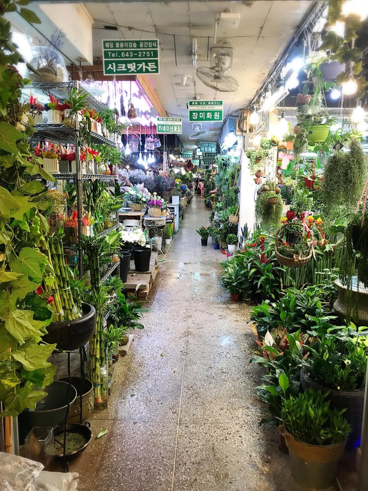 韓臺夫婦한대부부: 韓國 :: 釜山   凡一洞 自由市場 花卉批發市場 자유시장 꽃시장