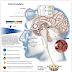 Luz e saúde I: O ciclo circadiano e suas peculiaridades