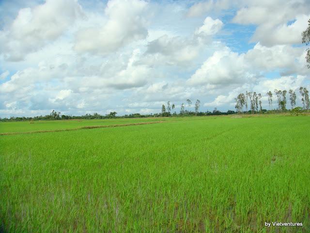 Cu Lao Gieng