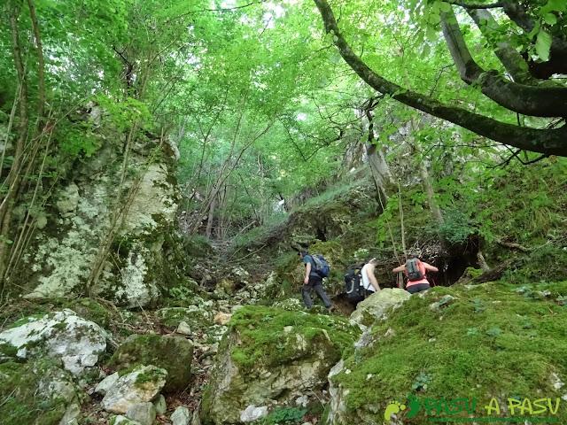 Pasada del Picayo: Subiendo entre bosque